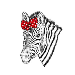 A zebra in bow. Vector illustration.