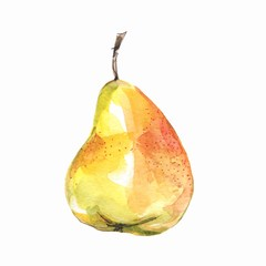 Yellow pear, isolated on white background. Watercolor illustration