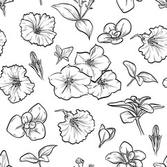 Vector petunya seamless pattern of flowers