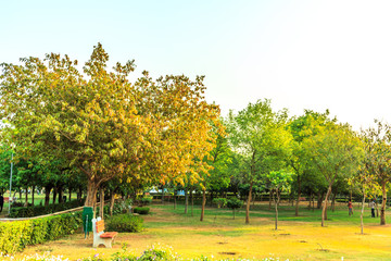Parks, Forest, plants and green area wonderful landscape in India