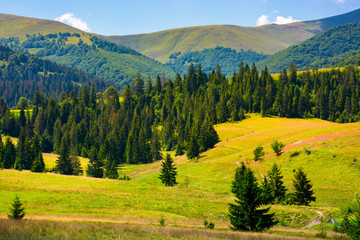 forested hills of Borzhava in summer. beautiful landscape in mountainous area of Carpathians, Ukraine