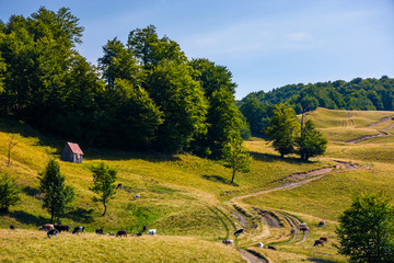 pasture and shed on the hillside. lovely summer landscape of Carpatian mountain