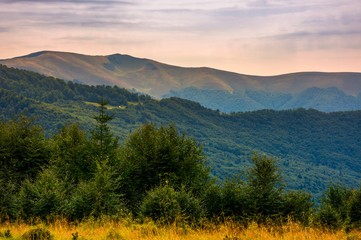 forested hills of Carpathian mountains in summer. Apetska mountain in the distance