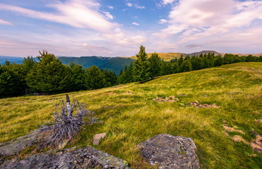 forest on the hillside in evening. beautiful landscape with Svydovets mountain ridge in the distance under the purple clouds on the blue sky. Carpathian mountains, Ukraine