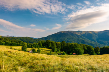 meadow near the forest at the foot of the mountain. wooden sheds in tall grass. beautiful summer evening landscape in the Aretska mountain area, Transcarpathia, Ukraine