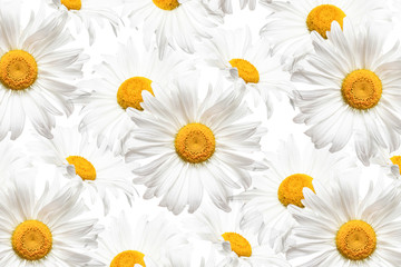 White flowers collage, daisy wallaper