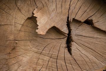 bois arbre matière texture tranche coupe scier tronc forêt bûcheron veine chêne forestier Fotobehang