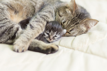 cat with her kitten sleeping and lying under the sun in an embrace