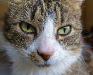 Close-up of a cat's face curiously looking into the camera