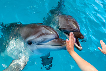 People hand touch a dolphin