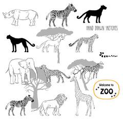Zoo animals sketches background
