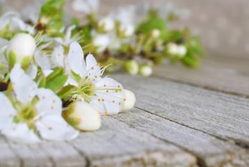 Tree blossom macro