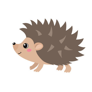 Vector flat illustration of cute hedgehog isolated on white background