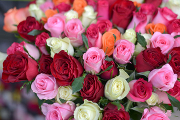 mélange de roses
