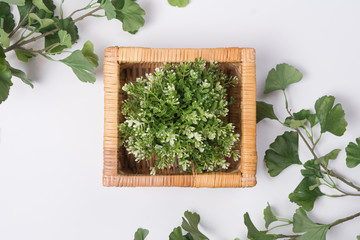 Plant in Wicker Basket with Branches Flat Lay Top View