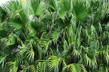 leaf palm tree in the garden
