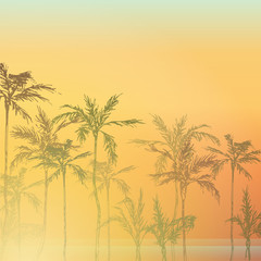 Palm trees on the beach. Palm forest by the sea. Palm trees at sunset near the ocean. Tropical palm trees.