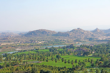 Green rice fields, palms and river Tungabhadra in the village of Hampi. Palm trees, the sun, rice fields. Tropical exotic landscape. Beautiful green valley. View from above
