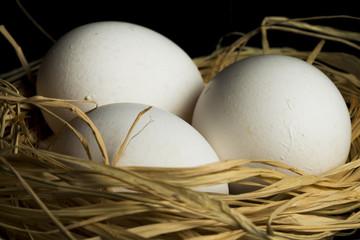 Beyaz tavuk yumurtası