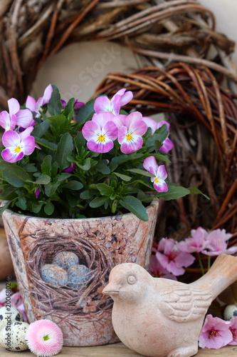 Gartendekoration Im Fruhling Mit Hornveilchen Stock Photo And