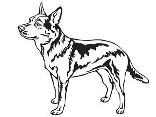 Decorative standing portrait of Australian Cattle Dog vector illustration