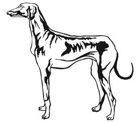 Decorative standing portrait of Azawakh vector illustration