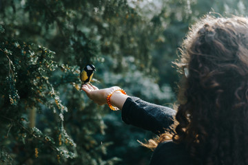 Kohlmeise findet Futter auf Hand einer jungen Frau im Park Wall mural