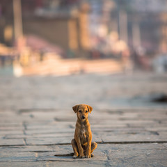 Little dog sitting alone on the street.