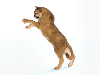 3d rendering  of a hunting puma isolated on white