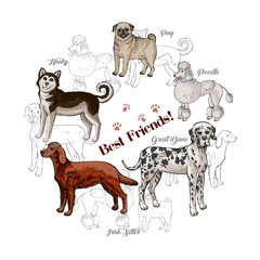Dogs sketches background with great dane, irish setter, pug and