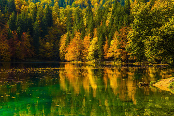 Fantastically beautiful forests