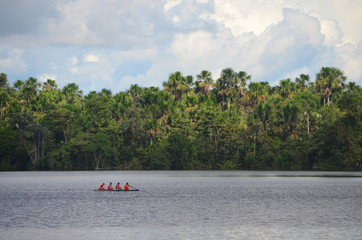Landscape of the treeline of the Amazon rainforest, from the Amazon river near Iquitos, Peru.