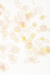petals background closeup