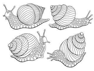 Snail escargot graphic black white isolated sketch set illustration vector