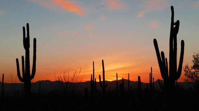 Sunset at Saguaro National Park near Tucson, Arizona