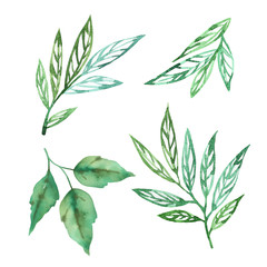 Spring green set with abstract leaves watercolor on white background. Herbal hand drawn illustration. Green sketch watercolor