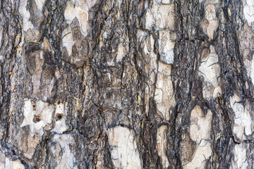Background image of tree bark with visible structure