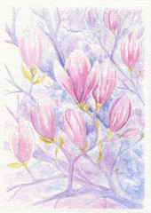 Flowering branches and flowers of magnolia, watercolor