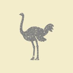Ostrich vector icon
