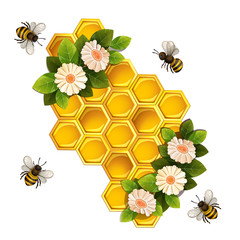 Bees, honeycombs and flowers isolated on white