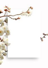Background frame with beautiful spring landscape