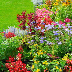 Summer flowerbed and green lawn. Floral pattern .