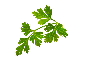 Fresh parsley, close-up, isolated on white background.