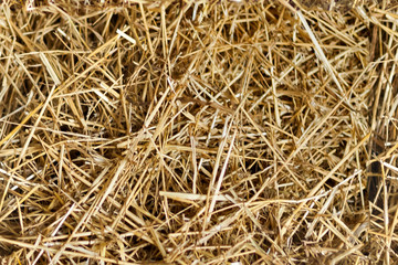 seamless texture hay background
