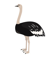 Cartoon ostrich icon on white background.