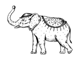 Circus elephant engraving vector illustration