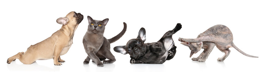 Group of cats and dogs in yoga poses