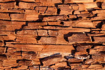 Texture of the old wooden with brown fissured rot close-up Wall mural