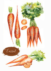 Hand drawn watercolor illustration of fresh orange ripe carrots. Isolated on the white background. Vegetarian food product