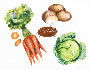 Hand-drawn watercolor food illustrations. Isolated drawings of the fresh vegetables - cabbage, carrot and potatoes